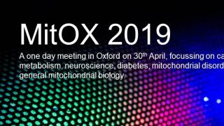 The Nuffield Department of Women's & Reproductive Health invites you to MitOX 2019 on Tuesday 30th April in Oxford. It's our annual meeting packed with short talks and posters on cancer metabolism, neuroscience, diabetes, mitochondrial disorders and general mitochondrial biology.