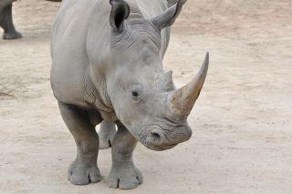 Bringing endangered species back from the brink
