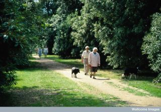 Retiring from work is good for your health