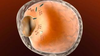 Blocking obesity-associated protein stops dangerous fat formation