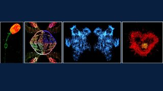 2019 ndorms imaging symposium and awards