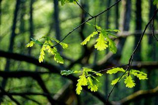 Photosynthesis in plants key to speedy evolution