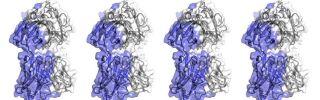 Computational antibody design tools