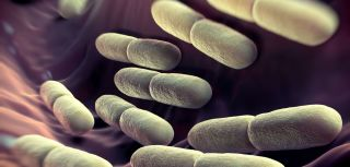 Researchers found that a competitive environment among 'good bacteria' in the gut helps to keep us healthy