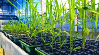 A new scholarship fund for the next generation of plant scientists