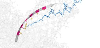 Molecular hopper created small enough to move single dna strands