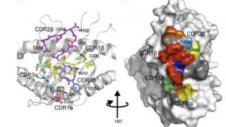 Viral Immunology