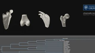 Scientists 3D print human of the future