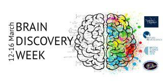 Brain discovery festival.jpg