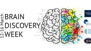 Divisional researchers take part in Brain Discovery Festival to highlight Brain Awareness Week (BAW).