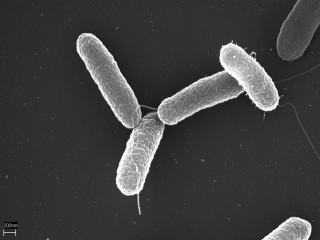 Vaccines against salmonella typhi call for participants