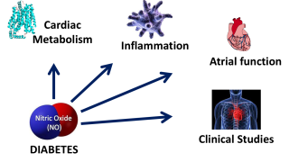 Diagram of the impact of NO on disease