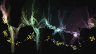 Folding genome 2
