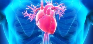 Antibody genes influence forgotten heart disease