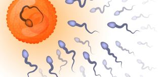 Maths formula offers key to sperm fertility