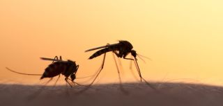 Modern housing and malaria