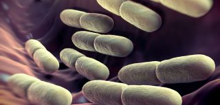 Competition between good bacteria important for healthy gut say researchers