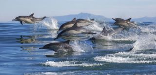 Dolphin brains show signs of alzheimer2019s disease.jpg