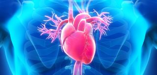 Protein clue to sudden cardiac death