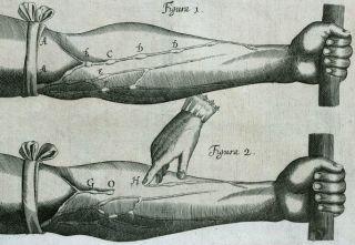 Illustration of Harvey's 'De Mortu Cordis.' Image Courtesy of Wellcome Images.