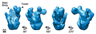 Cryo em structure of a protein complex that plays a key role in the fa dna repair pathway