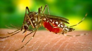 Tracking the evolution and transmission of yellow fever