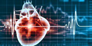 Cardiovascular Biology & Metabolism