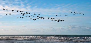 Common responses to the notion of migration studies