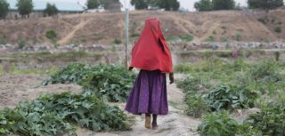 A young IDP walks through farmlands donated by Zannah Buka Mustapha to support more than 800 internally displaced families in Nigeria