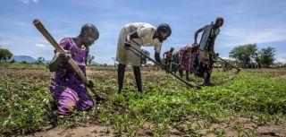 South sudanese refugees nyumanzi uganda