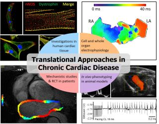 Casadei group translational approaches in chronic cardiac disease 6
