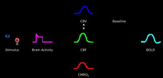 Fmri physiology