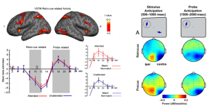 Mutual interactions between attention and working memory