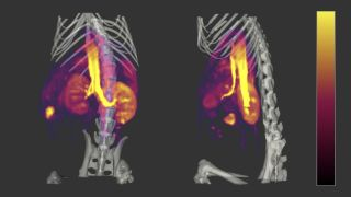 The Imaging SRF provides routine technical support services and operates a programme of advanced method development in order to optimise the use of the imaging facility.