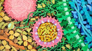New defence mechanism against viruses