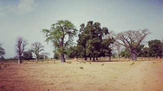 Post Doctoral Researcher Caitlin Naylor discusses her experiences living and working at MRC Unit The Gambia at LSHTM.