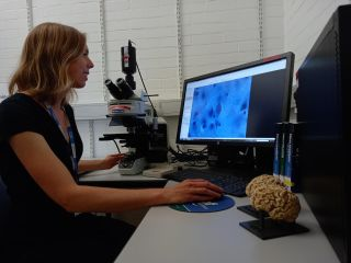 A researcher looks at an image of a brain scan