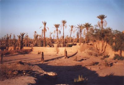 In various North African oases, traditional agriculture has suffered from lack of maintenance of collective irrigation systems and mechanical  water pumping for urban use and modern agriculture, leading to decliningwater tables and the drying up of wells, small rivers and other natural water sources. Photo (Morocco): Hein de Haas