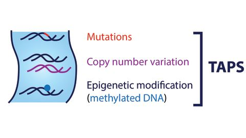 Figure: TAPS can detect mutations, copy number variations and DNA methylation profiles in the same sequencing run.