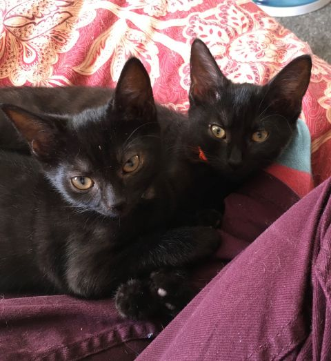 Kittens update
