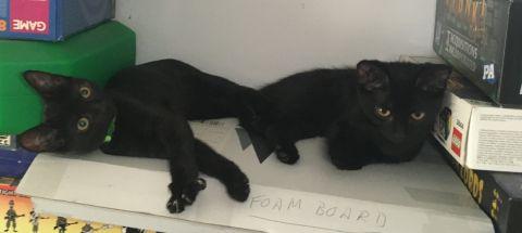 Kittens on shelf