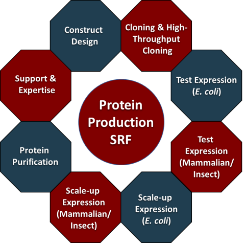 Protein Production Activities