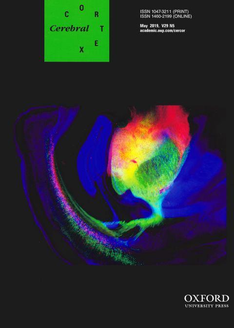 Cerebral cortex May 2019.jpg