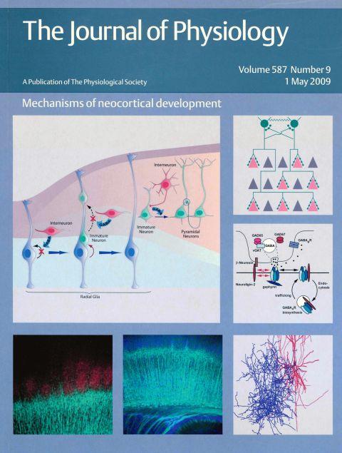 Mechanisms of neocortical development Vol 587 2009.jpg