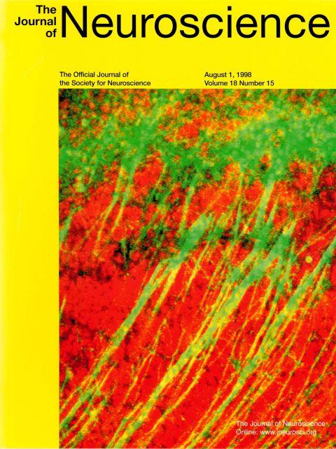 Neuroscience 1998.jpg