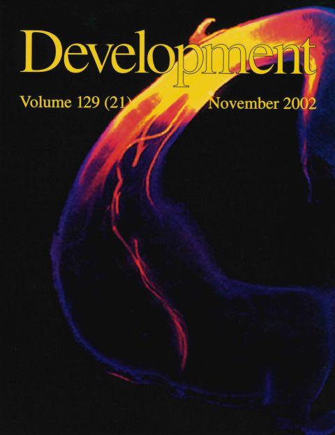 Development 2002.jpg