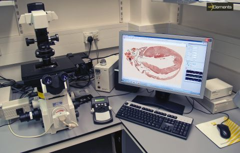 scanning-whole-rat-heart-section
