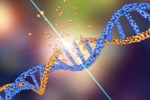 DNA breaks.jpg