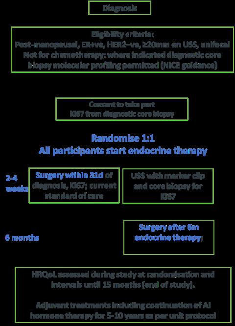 EndoNET Trial Schema 1 (SITU)