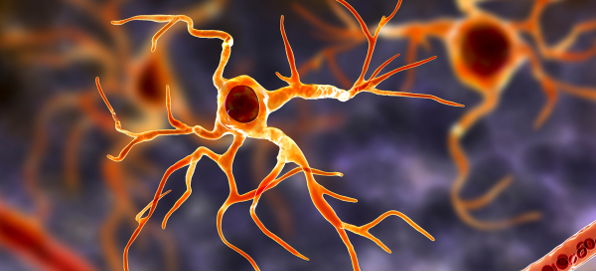 A graphic of an astrocyte, a type of glial cell.